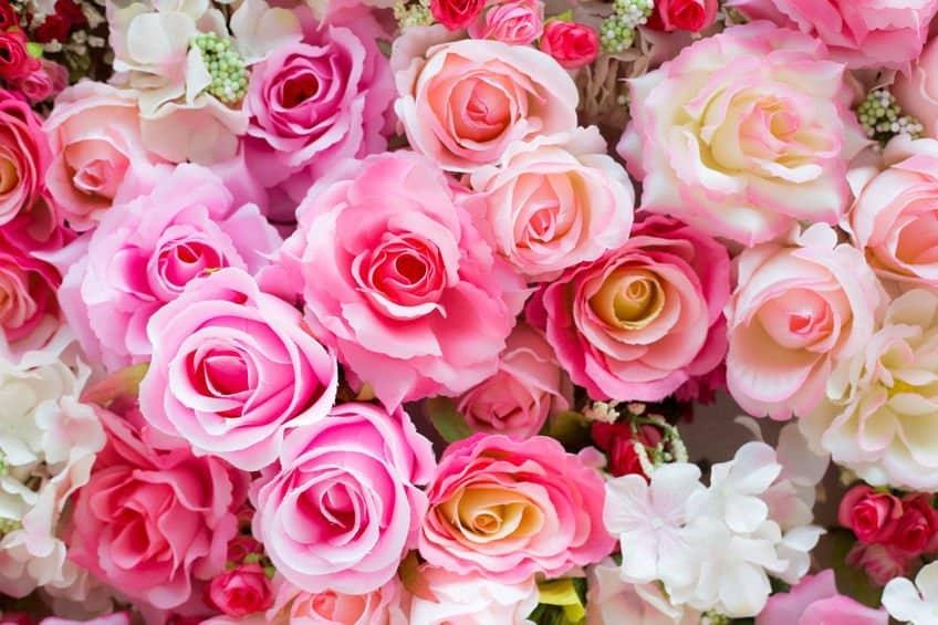 Rose-and-Ylang-Ylang